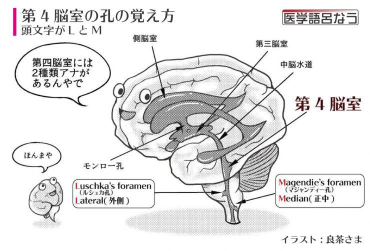 第4脳室の覚え方